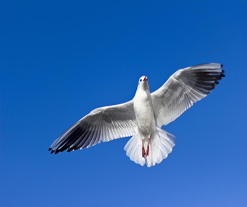 Fliegende Möwe vor einem blauen Himmel